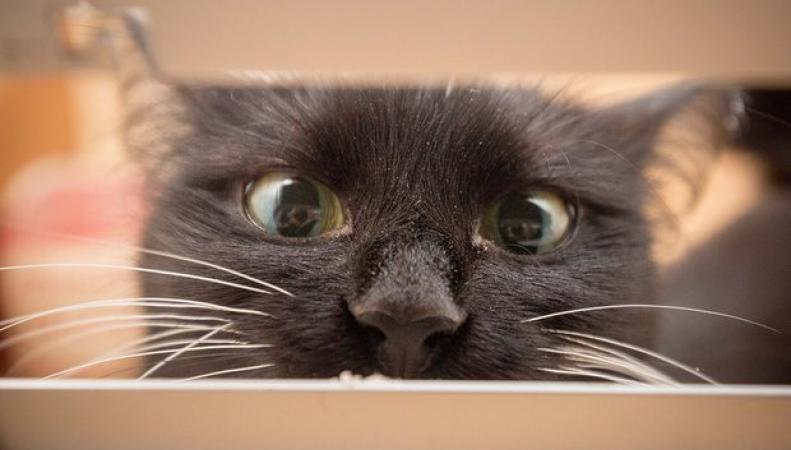 Британские почтальоны боятся домашних котов фото: theguardian.com