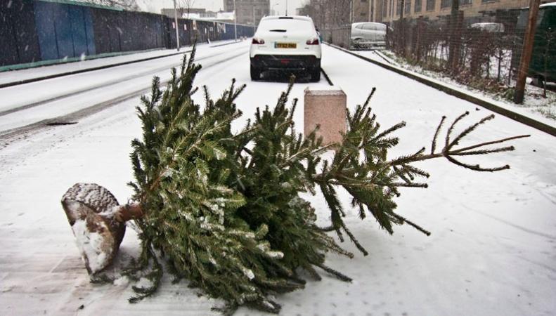 Как с пользой и законно избавиться от рождественской елки в Лондоне