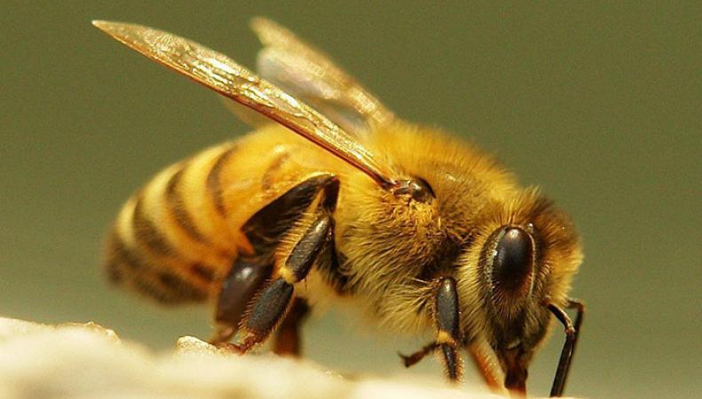 Автомобиль британки стал местом жительства для нескольких тысяч пчел