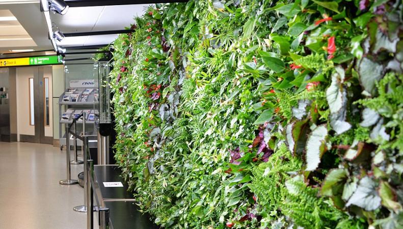 Вертикальный сад Хитроу: руководство аэропорта заказало масштабное озеленение зала вылета фото:standard.co.uk