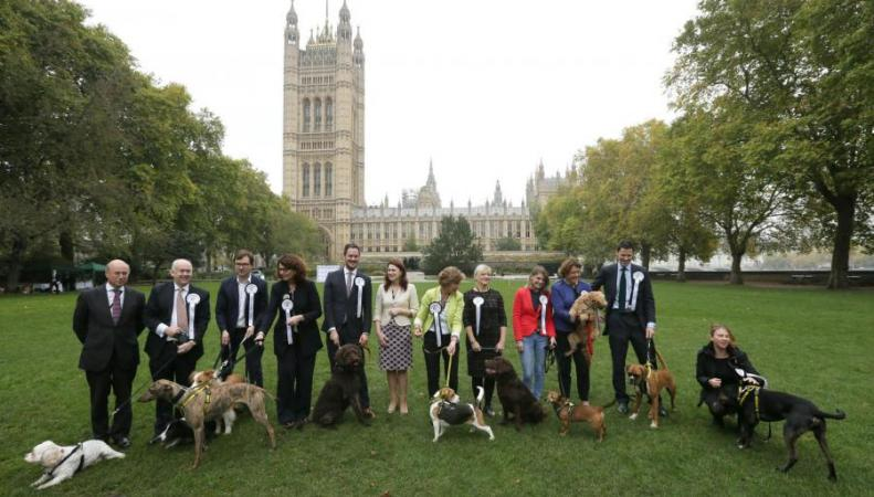 Депутаты британского парламента посоревновались в привязанности к своим собакам