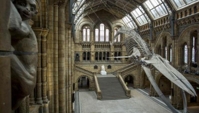 Музей естествознания в Лондоне отказался от пластиковых бутылок