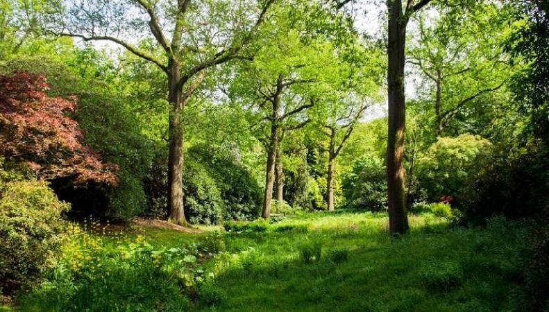 На севере Англии высадят пятьдесят миллионов деревьев
