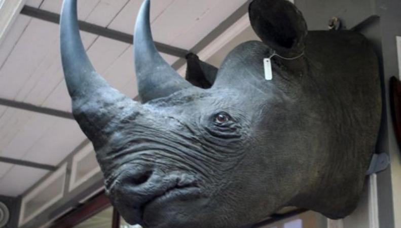 голова носорога экспонат