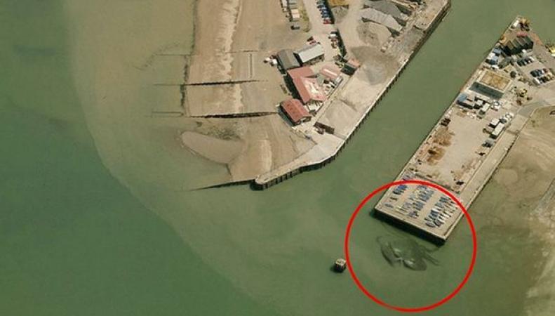 Гигантский краб у побережья города Уитстабл