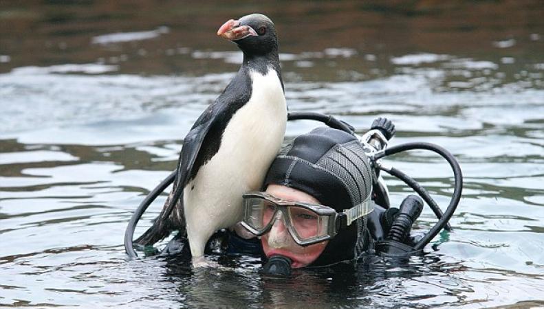Пингвин Йо-Йо