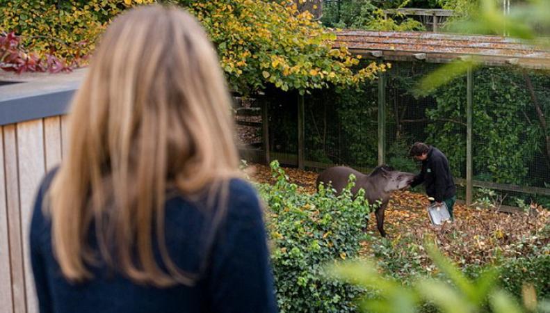 В бристольском зоопарке открыли сафари-отель