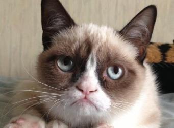 Британская фармкомпания провалила испытание лекарства от аллергии на кошек фото:dailymail.co.uk